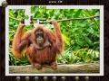 1001 Jigsaw World Tour Africa, screenshot #3
